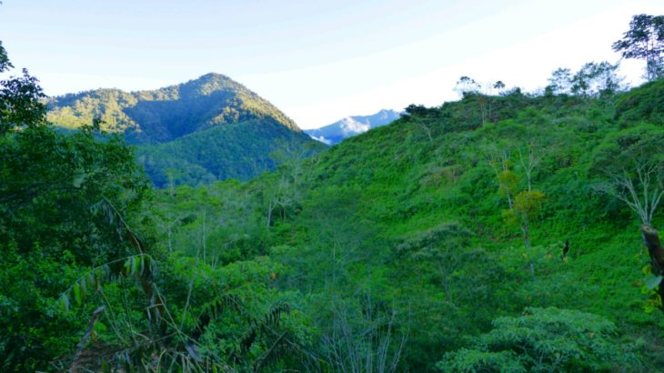Chirripo Nationalpark