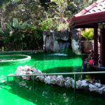 Paradise Spring Pool-Bar