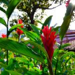 Eine weitere schöne Blume