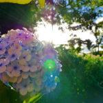 Eine schöne Blume